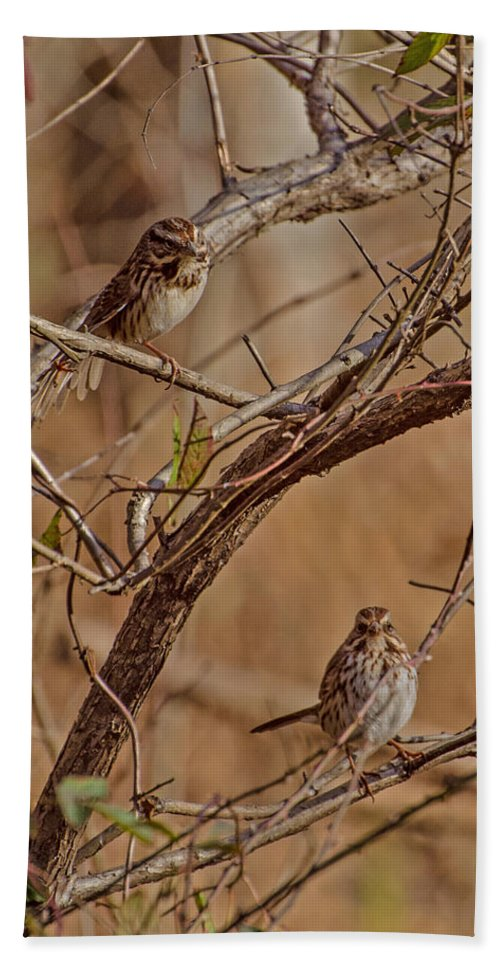 Birds Hand Towel featuring the photograph Song Sparrows by Donna Brown