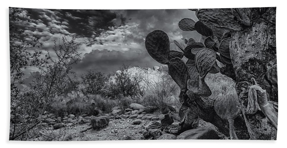 2013 Hand Towel featuring the photograph Sonoran Desert 15 by Mark Myhaver