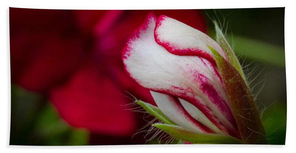 Nature Hand Towel featuring the photograph Sooon.... by Andreas Levi