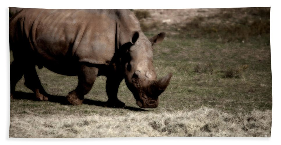 Southern Black Rhino Hand Towel featuring the photograph Southern Black Rhino by Douglas Barnard
