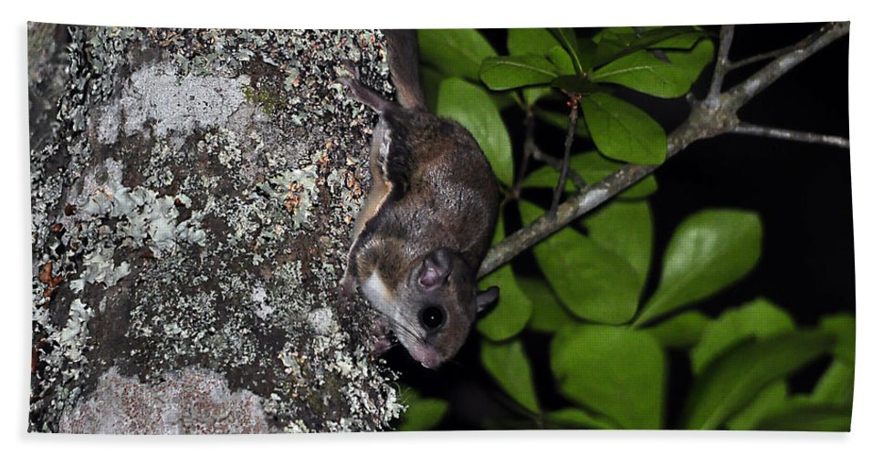 Squirrel Hand Towel featuring the photograph Southern Flying Squirrel by Al Powell Photography USA