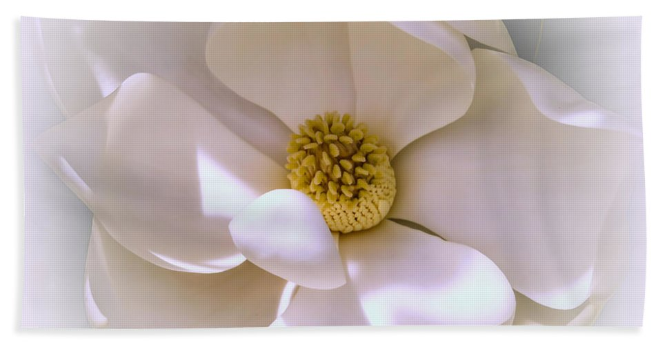Magnolia Hand Towel featuring the photograph Southern Magnolia by Zina Stromberg