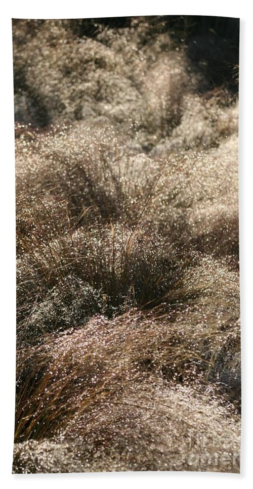 Grasses Bath Sheet featuring the photograph Sparkling Grasses by Nadine Rippelmeyer