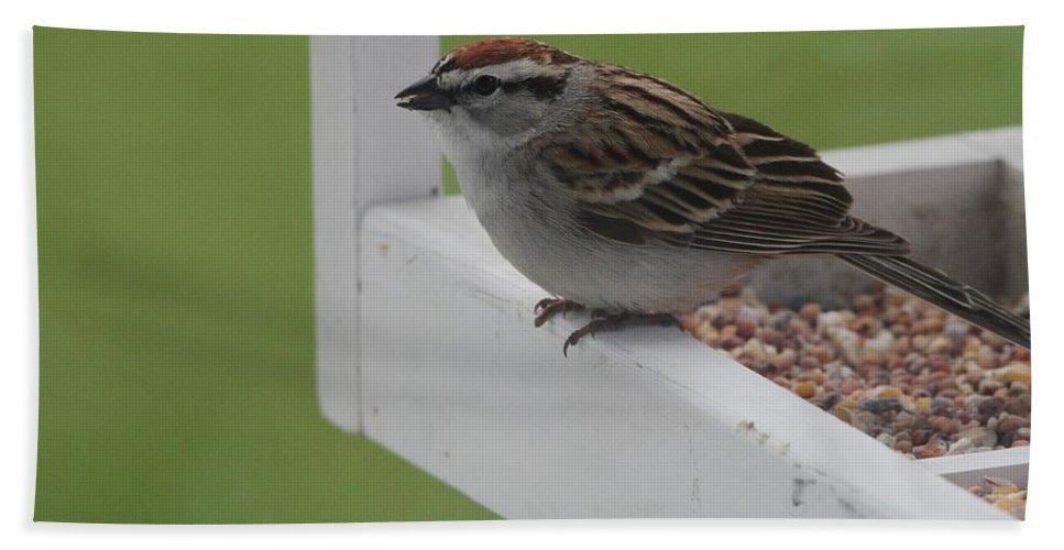 Sparrow Snack Bath Sheet featuring the photograph Sparrow On Feeder by Dan Sproul