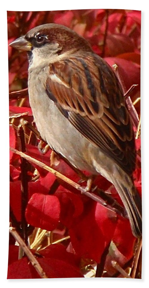 Sparrow Bath Towel featuring the photograph Sparrow by Rona Black