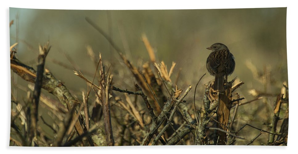 Sparrow Bath Sheet featuring the photograph Sparrow Watch by Rob Hawkins