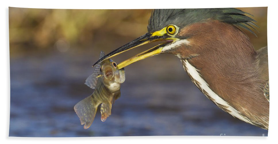 Heron Hand Towel featuring the photograph Speared by Bryan Keil