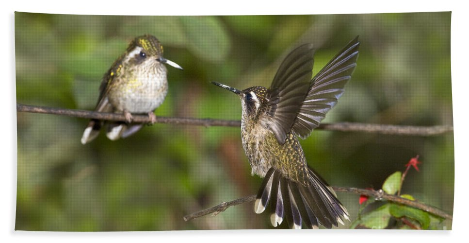 Animal Hand Towel featuring the photograph Speckled Hummingbirds by Anthony Mercieca