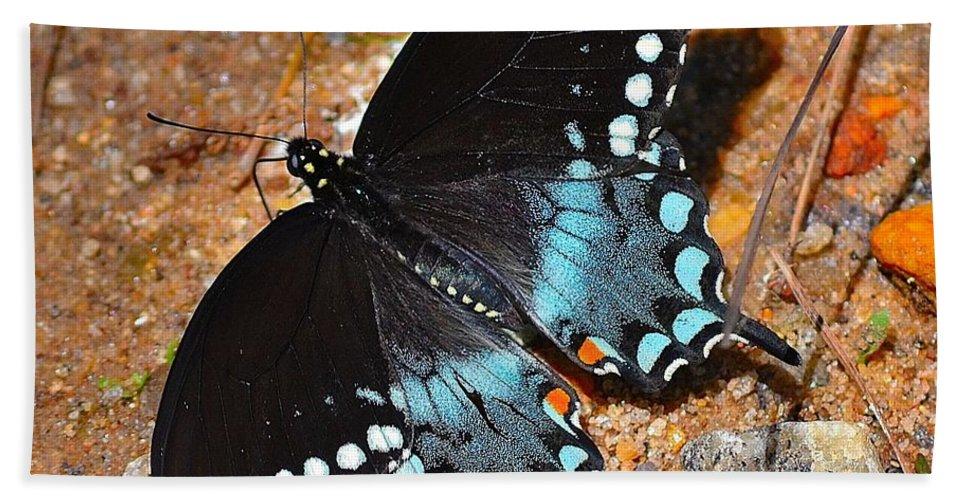 Spicebush Bath Sheet featuring the photograph Spicebush Swallowtail Butterfly by Tara Potts