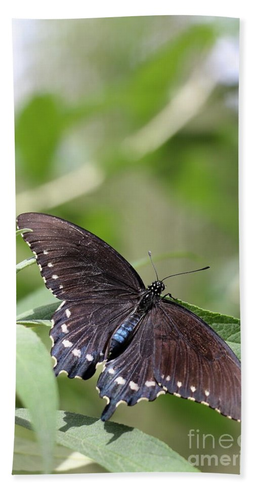 Spicebush Hand Towel featuring the photograph Spicebush Swallowtail by Christiane Schulze Art And Photography