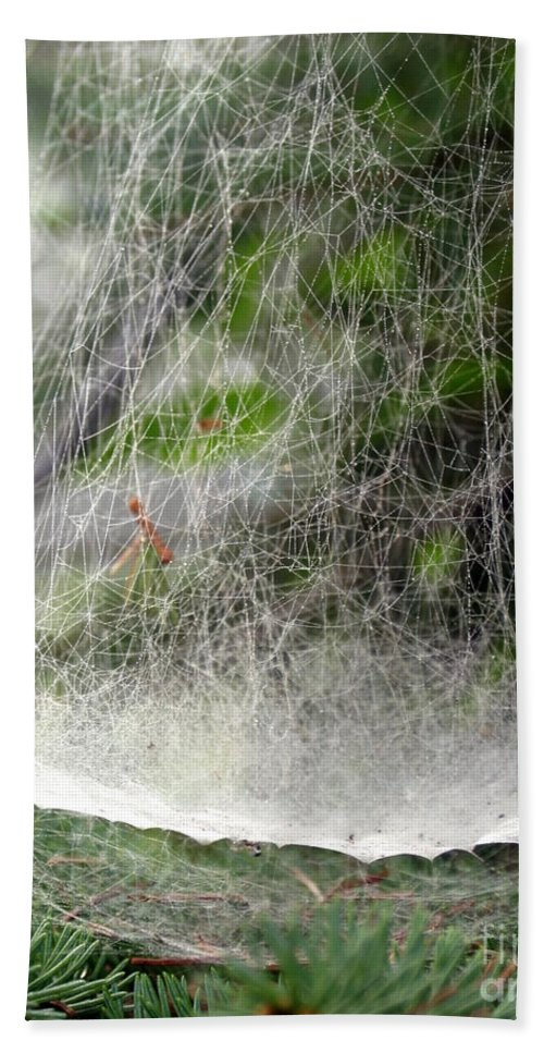 Bowl Hand Towel featuring the photograph Spider Bowl by Kenny Glotfelty