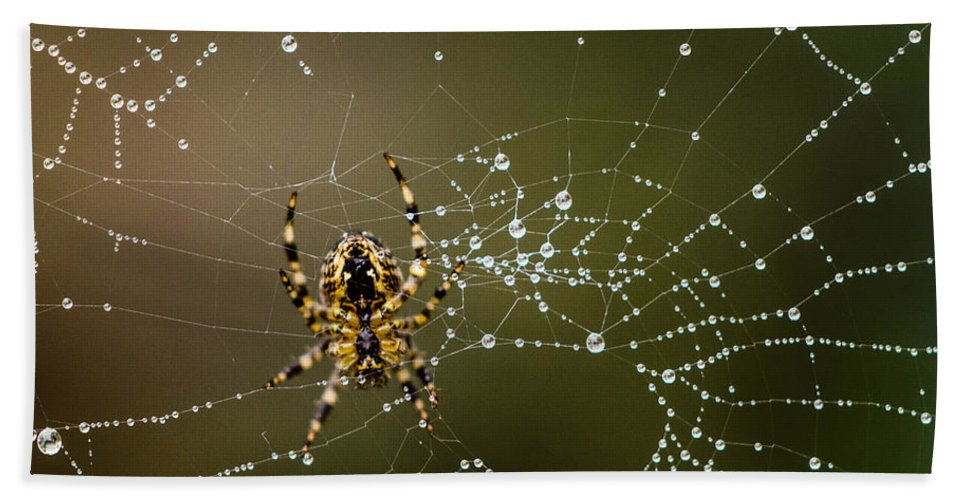 Arachnid Hand Towel featuring the photograph Spider In Web 5 by Tracy Knauer
