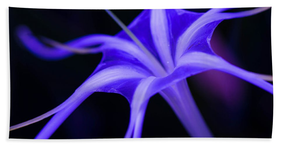 Soider Lillies Bath Sheet featuring the photograph Spider Lilly by Michael Moriarty