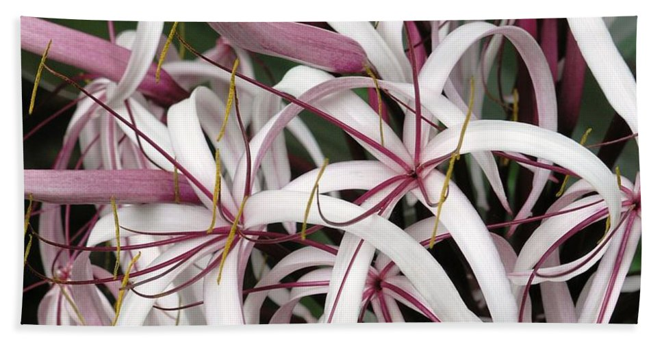 Lily Hand Towel featuring the photograph Spider Lily by Mary Deal