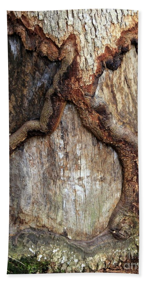 Wood Hand Towel featuring the photograph Spirit Of The Forest by Kenny Glotfelty