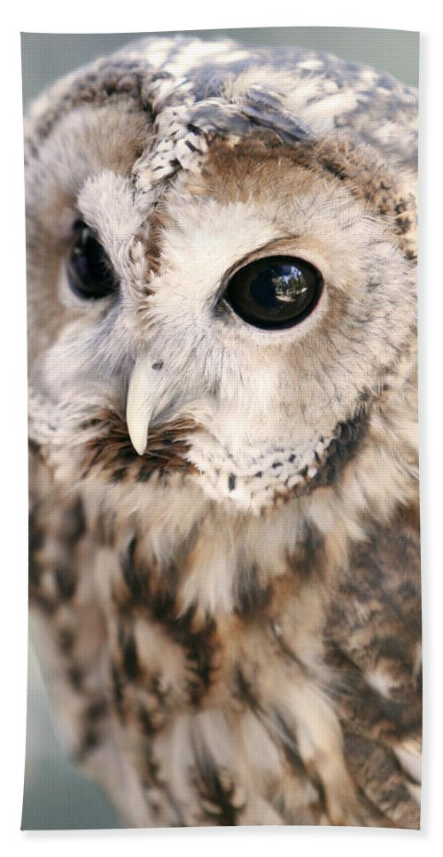Owl Hand Towel featuring the photograph Spotted Owl by Shoal Hollingsworth