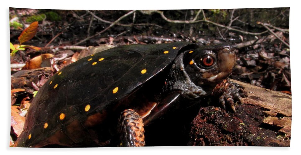 Spotted Turtle Prints Bath Sheet featuring the photograph Spotted Turtle by Joshua Bales