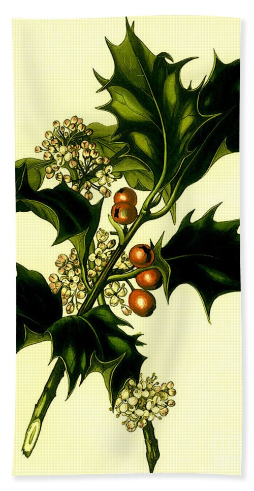 Sprig Hand Towel featuring the digital art Sprig Of Holly With Berries And Flowers Vintage Poster by R Muirhead Art