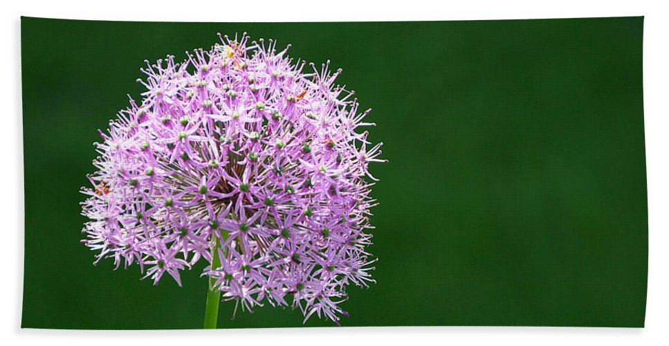 Flower Bath Sheet featuring the photograph Spring Allium by Susan Herber