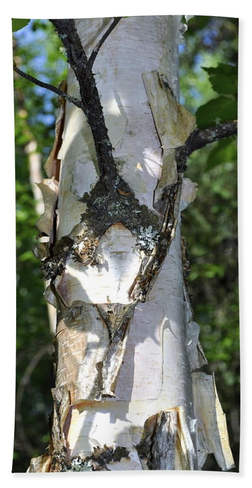 Birch Bath Sheet featuring the photograph Spring Birch by Cathy Mahnke