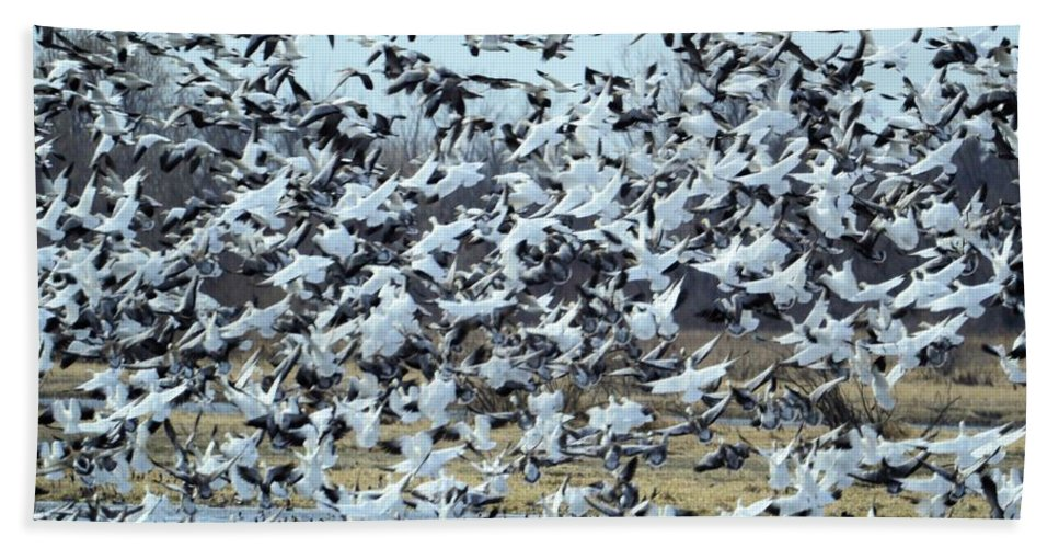 Blizzard Bath Sheet featuring the photograph Spring Blizzard by Bonfire Photography