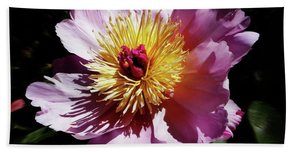 Peony Bath Sheet featuring the photograph Spring Blossom 12 by Xueling Zou