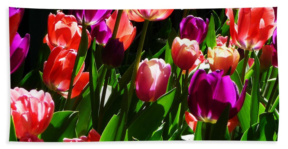 Tulips Hand Towel featuring the photograph Spring Blossom 5 by Xueling Zou