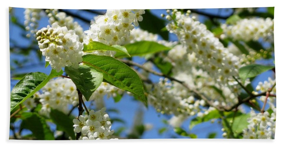 Botanical Garden Bath Sheet featuring the photograph Spring Blossom by Lena Photo Art