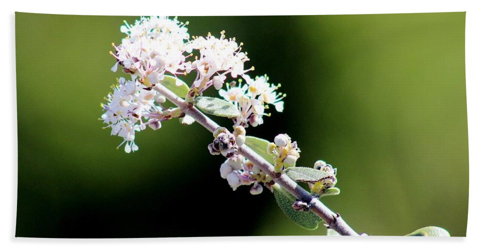 Wildlife Bath Sheet featuring the photograph Spring Blossoms White 031015aa by Edward Dobosh