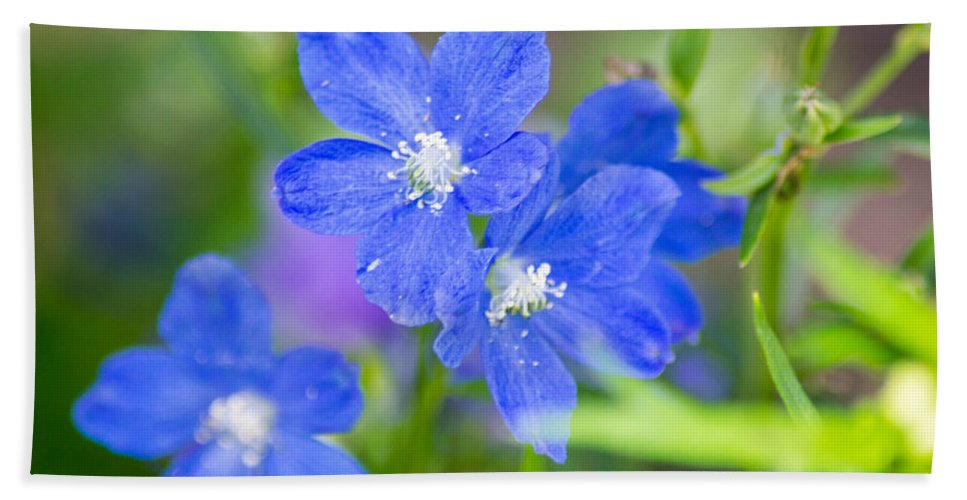 Flowers Hand Towel featuring the photograph Spring Blue by Shannon Harrington