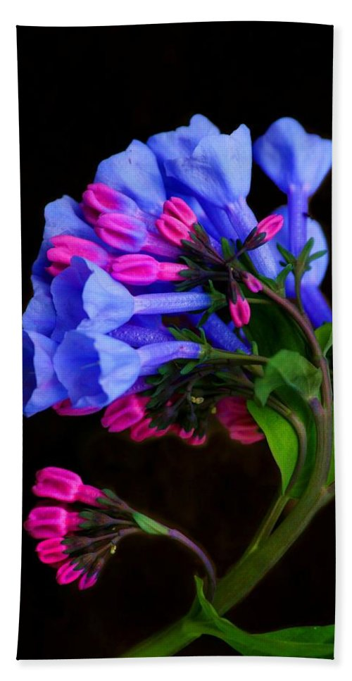 Flower Hand Towel featuring the photograph Spring Bluebells by John Absher