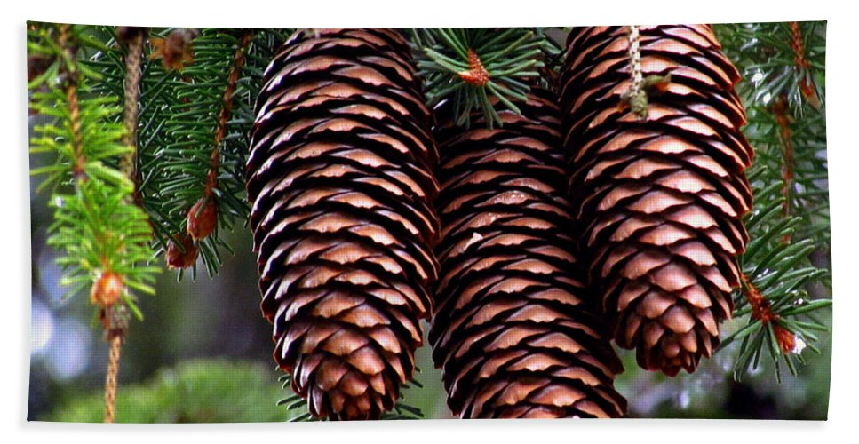 Pine Cones Hand Towel featuring the photograph Spring Christmas Tree by Lori Pessin Lafargue