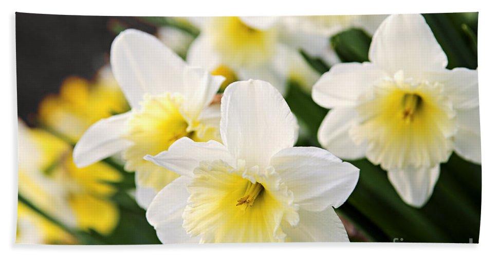 Daffodil Bath Sheet featuring the photograph Spring Daffodils by Elena Elisseeva