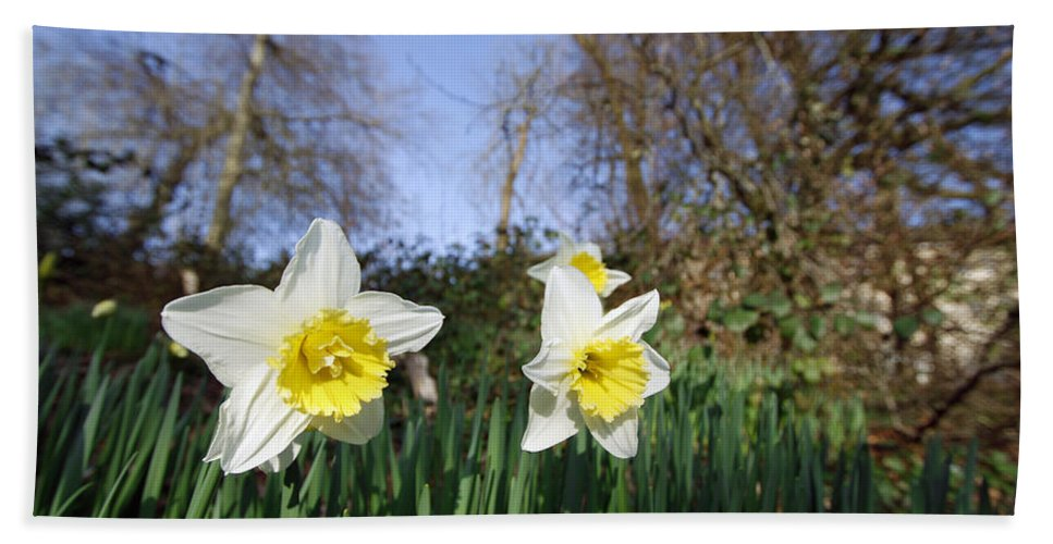 Plants Hand Towel featuring the photograph Spring Daffodils by Steve Ball