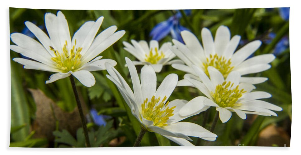 Spring Bath Sheet featuring the photograph Spring Daisies by Darleen Stry