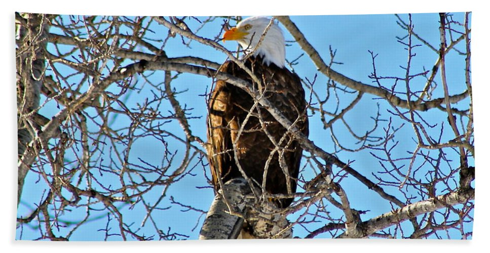 Eagle Bath Sheet featuring the photograph Spring Eagle by Rick Monyahan