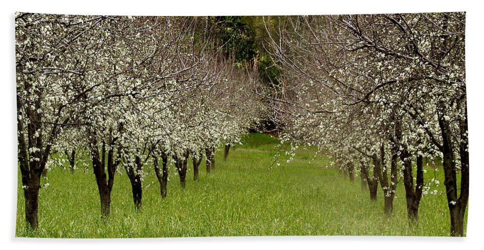 Landscapes Hand Towel featuring the photograph Spring Has Sprung by Bill Gallagher
