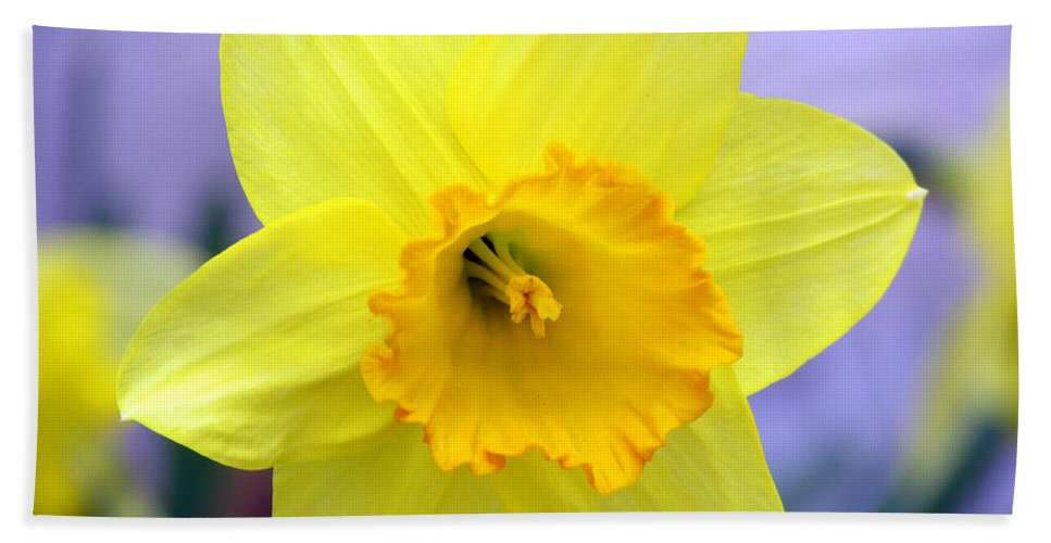 Jonquil Bath Sheet featuring the photograph Spring Has Sprung by Elizabeth Dow