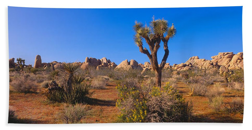 Photography Bath Sheet featuring the photograph Spring In Joshua Tree National Park by Panoramic Images