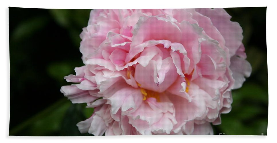 Peony Hand Towel featuring the photograph Spring In Pink by Christiane Schulze Art And Photography