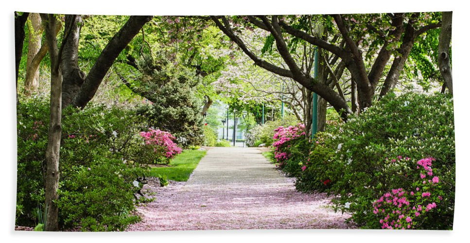 Spring Hand Towel featuring the photograph Spring In Washington Dc by Carol VanDyke