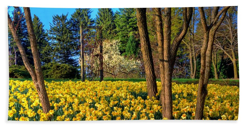 Yellow Bath Sheet featuring the photograph Spring Is In The Air by John Absher