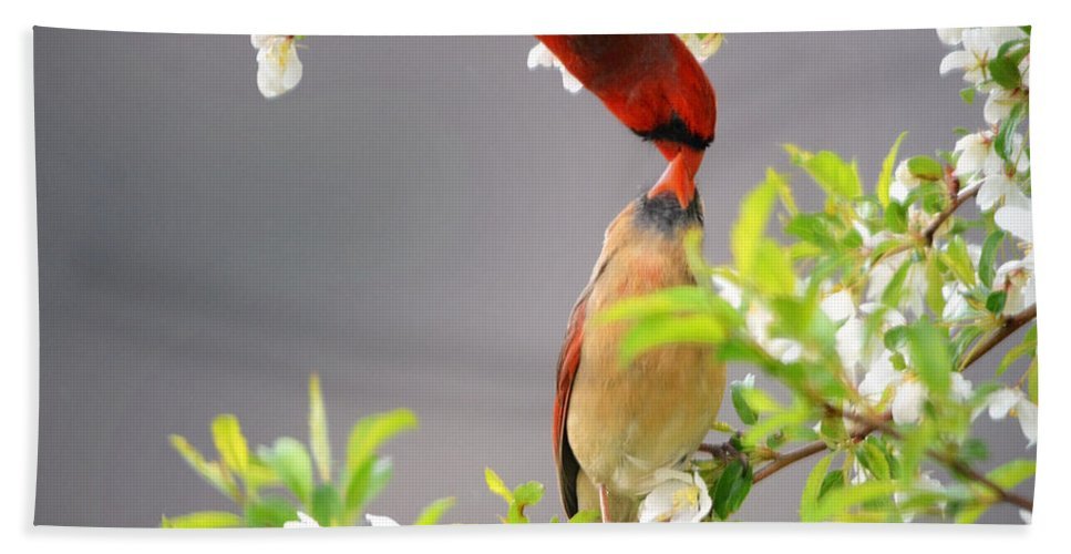 Nature Hand Towel featuring the photograph Cardinal Spring Love by Nava Thompson