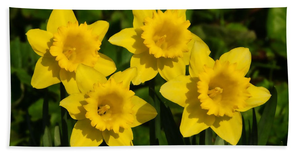 Daffs Hand Towel featuring the photograph Spring Quartet by Susie Peek
