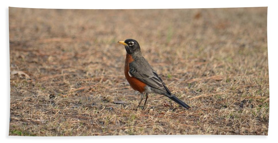 Spring Robin 2014 Hand Towel featuring the photograph Spring Robin 2014 by Maria Urso