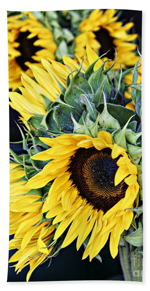 Sunflowers Bath Sheet featuring the photograph Spring Sunflowers by Lilliana Mendez