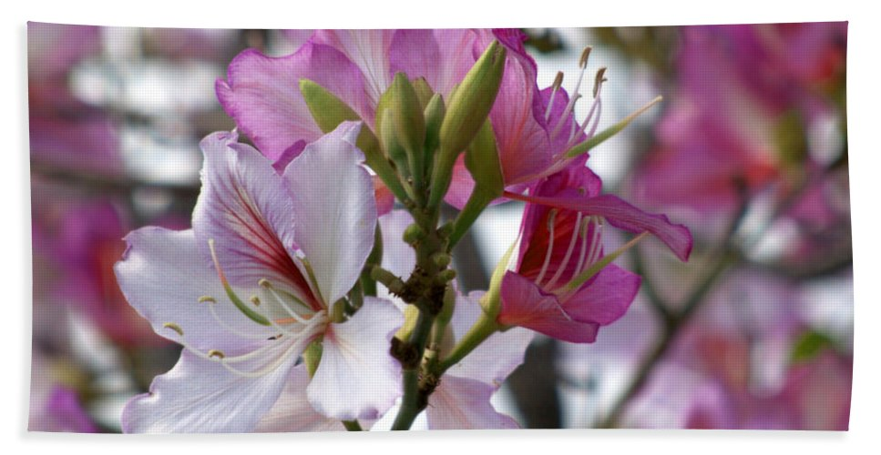 Diana Graves Photography Hand Towel featuring the photograph Spring Tree Blossoms by K D Graves