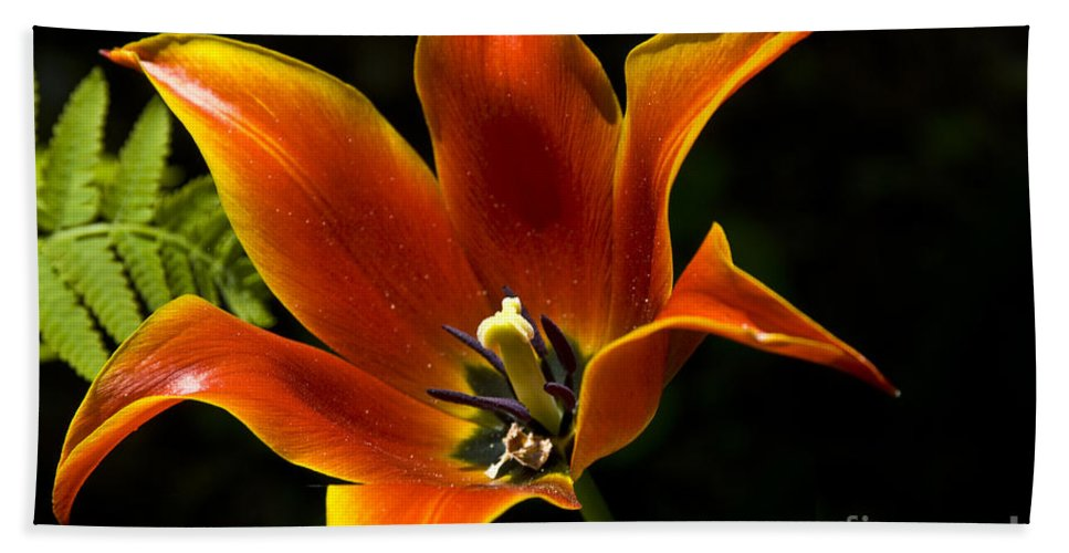 Flower Hand Towel featuring the photograph Spring Tulip by Anthony Sacco