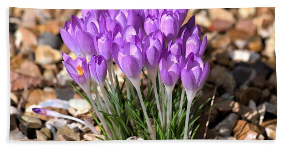 Spring Flowers Hand Towel featuring the photograph Springflowers by Gordon Auld