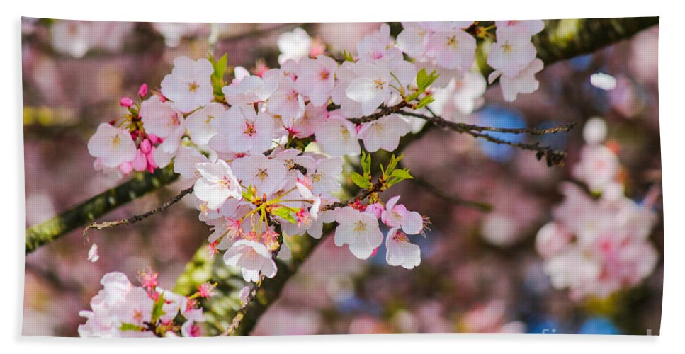 Cherry Blossoms Hand Towel featuring the photograph Spring's First Blush by Patricia Babbitt